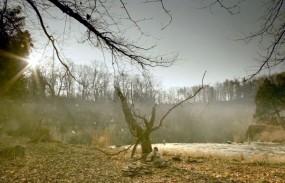 Hemlock Grove - Birth